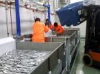 Строительство рыбоводных заводов