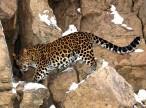 Тихой тропой леопарда