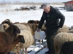 Планы и реалии фермерской жизни