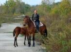 Её кони не привередливые